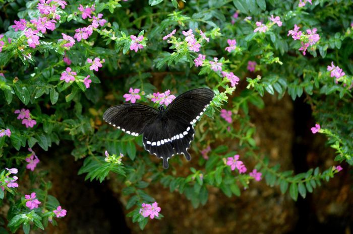 多摩動物園 蝶園 10月8日_d0254540_18191026.jpg