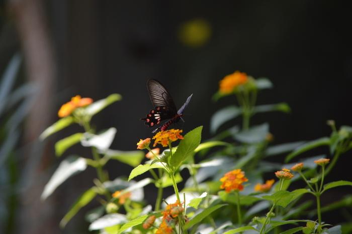 多摩動物園 蝶園 10月8日_d0254540_18193424.jpg