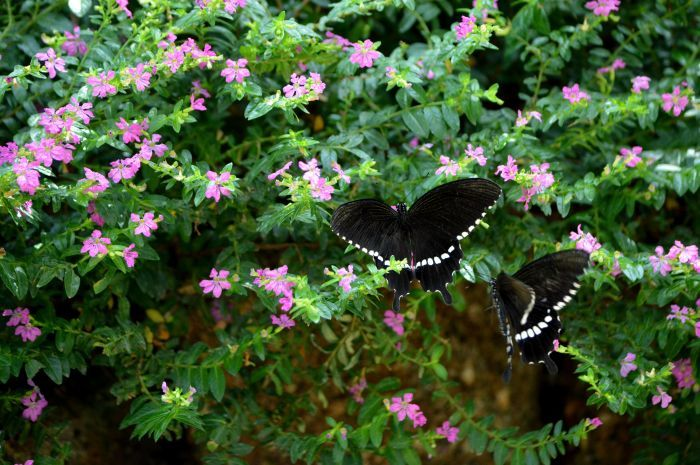 多摩動物園 蝶園 10月8日_d0254540_18203363.jpg
