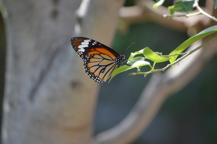 多摩動物園 蝶園 10月8日_d0254540_18244926.jpg