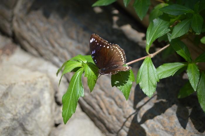 多摩動物園 蝶園 10月8日_d0254540_18294068.jpg