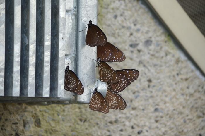 多摩動物園 蝶園 10月8日_d0254540_18303201.jpg