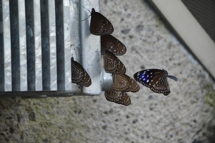 多摩動物園 蝶園 10月8日_d0254540_18305732.jpg