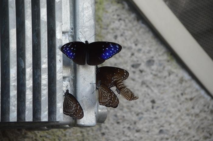 多摩動物園 蝶園 10月8日_d0254540_18312776.jpg