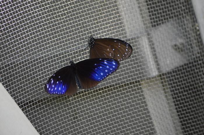 多摩動物園 蝶園 10月8日_d0254540_18315275.jpg