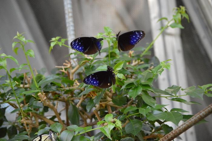 多摩動物園 蝶園 10月8日_d0254540_18322575.jpg