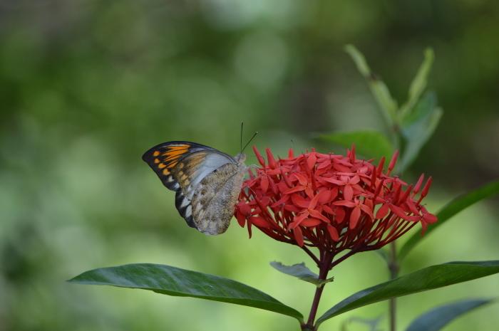 多摩動物園 蝶園 10月8日_d0254540_18362116.jpg