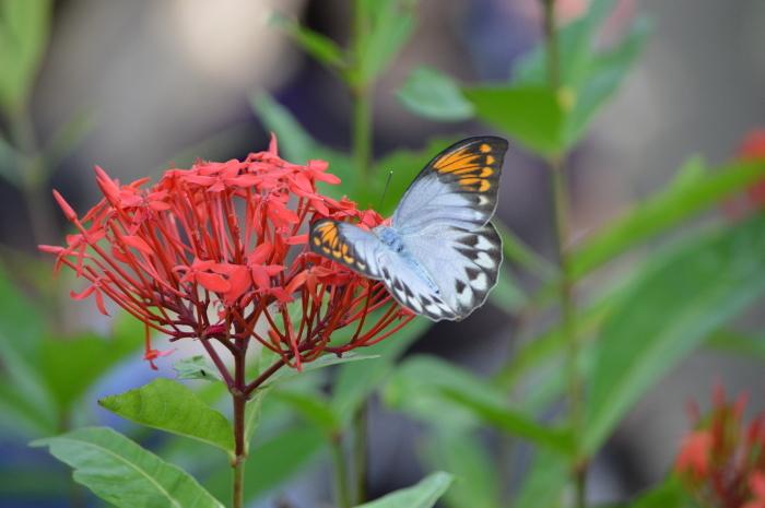 多摩動物園 蝶園 10月8日_d0254540_18365729.jpg