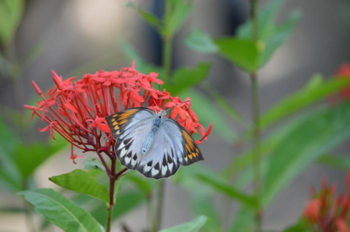 多摩動物園 蝶園 10月8日_d0254540_18371704.jpg
