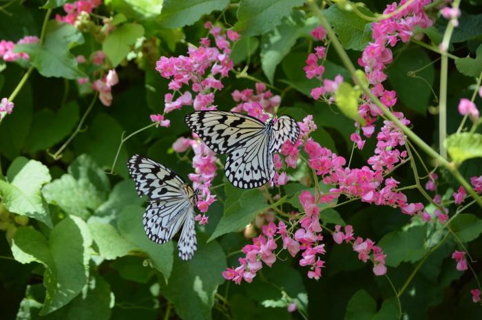 多摩動物園 蝶園 10月8日_d0254540_18385164.jpg