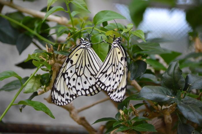 多摩動物園 蝶園 10月8日_d0254540_19441567.jpg
