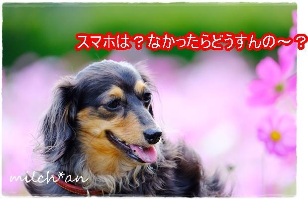 b0115642_21305319.jpg