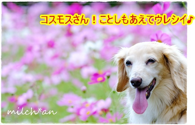 b0115642_21312355.jpg