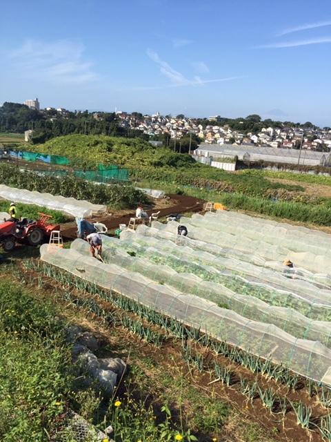 今日はカステルフランコの畝作りと播種 ブロッコリーカリフラワー ロマネスコ 芽キャベツの畝の雑草取り_c0222448_16350177.jpg