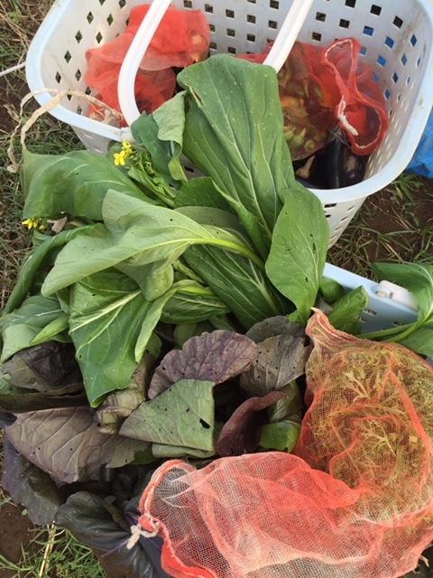 今日はカステルフランコの畝作りと播種 ブロッコリーカリフラワー ロマネスコ 芽キャベツの畝の雑草取り_c0222448_16362618.jpg
