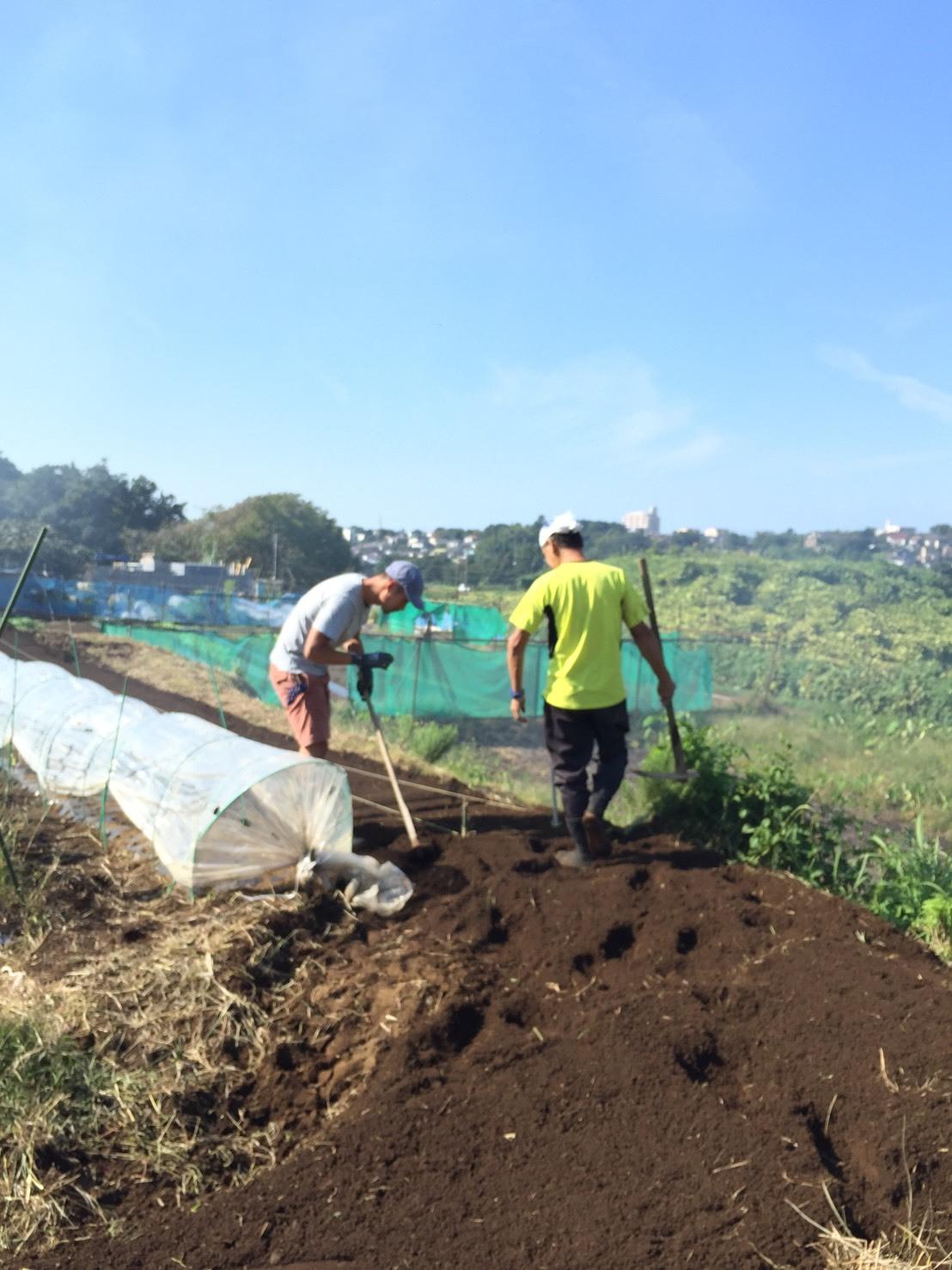 今日はカステルフランコの畝作りと播種 ブロッコリーカリフラワー ロマネスコ 芽キャベツの畝の雑草取り_c0222448_16450334.jpg