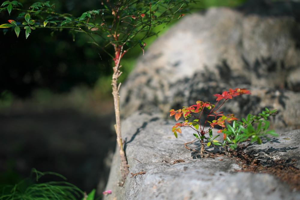 秋の庭。_c0179360_12041017.jpg