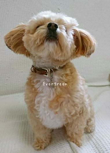 relaxing  day ♪_d0362666_16510214.jpg