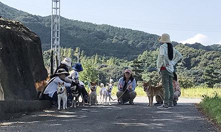 和散歩がまた始まりました(^^)/_b0057675_22223325.jpg