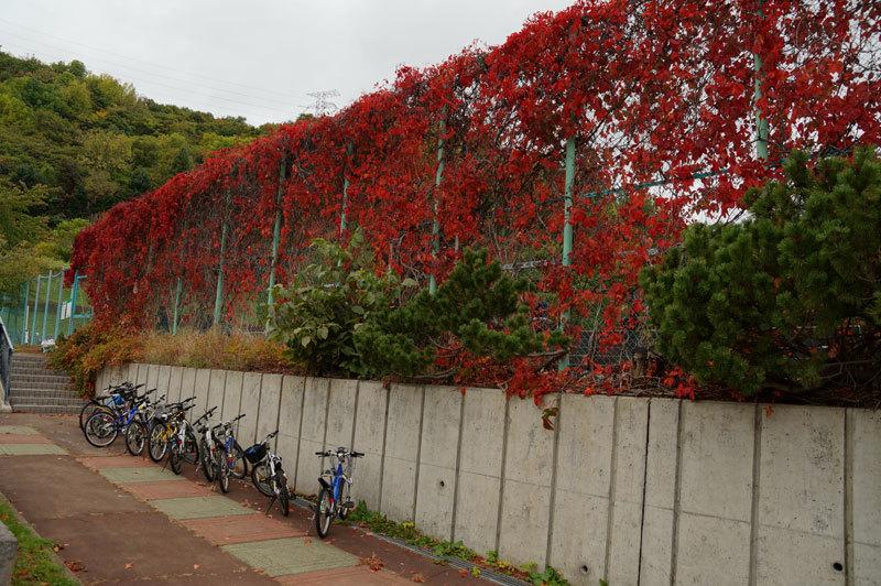 紅葉の季節_d0162994_08464473.jpg