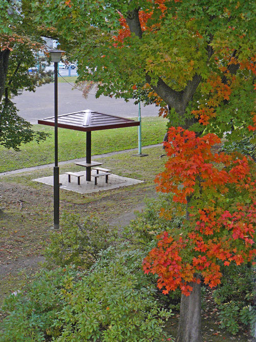 紅葉の季節_d0162994_08473319.jpg