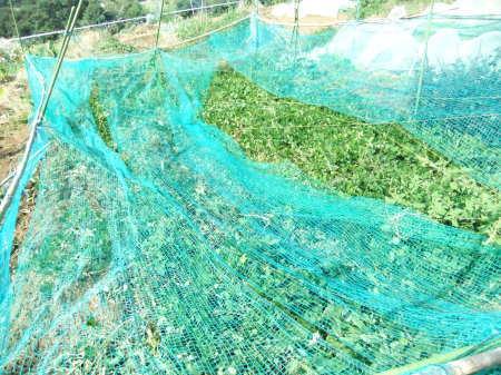 落花生の収穫..開始_b0137932_17384872.jpg