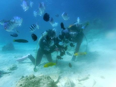 クマノミポイントで体験ダイビング!_a0156273_14511605.jpg