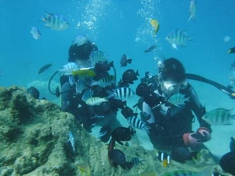 クマノミポイントで体験ダイビング!_a0156273_14511688.jpg