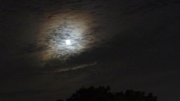 大将塀を作る!今頃ですが中秋の名月&十六夜の月_b0290816_12174815.jpg