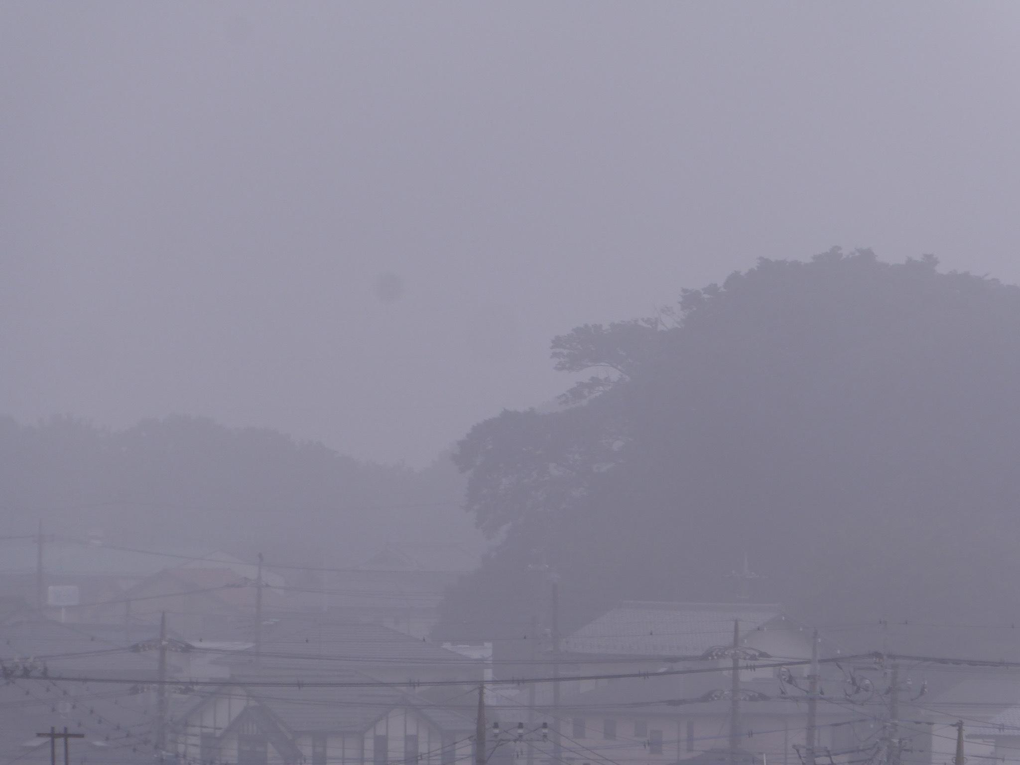 濃霧に出鼻をくじかれて_a0050728_10030077.jpeg