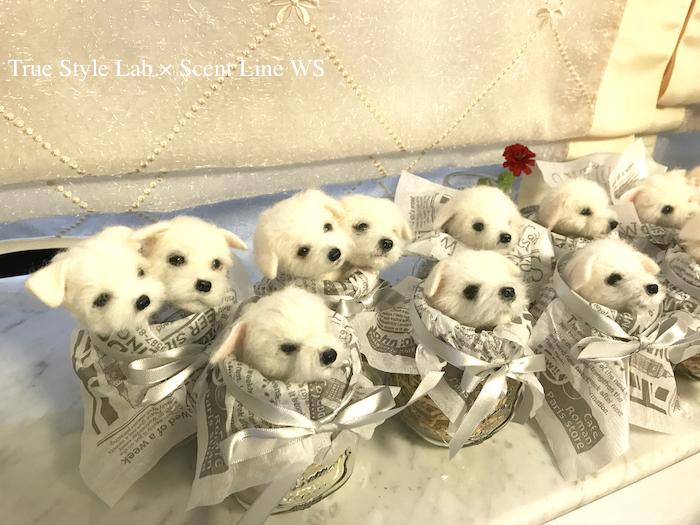 羊毛フェルトWS「マルチーズの子犬」レポート3_c0099133_07011979.jpg