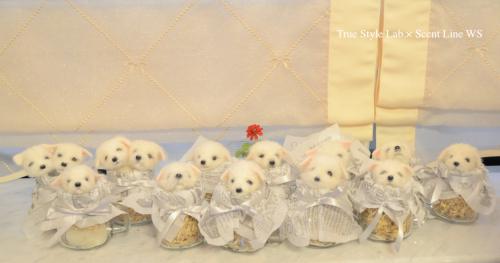 羊毛フェルトWS「マルチーズの子犬」レポート3_c0099133_07014017.jpg