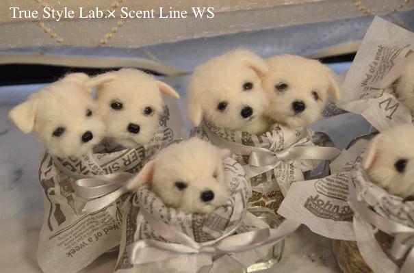 羊毛フェルトWS「マルチーズの子犬」レポート3_c0099133_07053891.jpg
