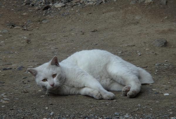 白猫プロジェクト?_a0248481_23033757.jpg