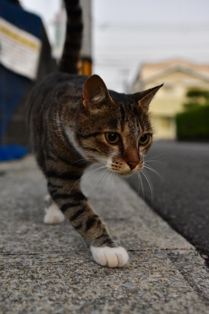 充実! 朝のお散歩(*^_^*)_c0049299_21220272.jpg
