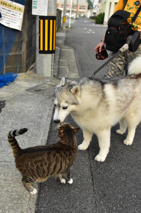 充実! 朝のお散歩(*^_^*)_c0049299_21264013.jpg
