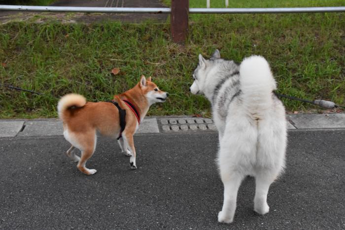 充実! 朝のお散歩(*^_^*)_c0049299_21310136.jpg