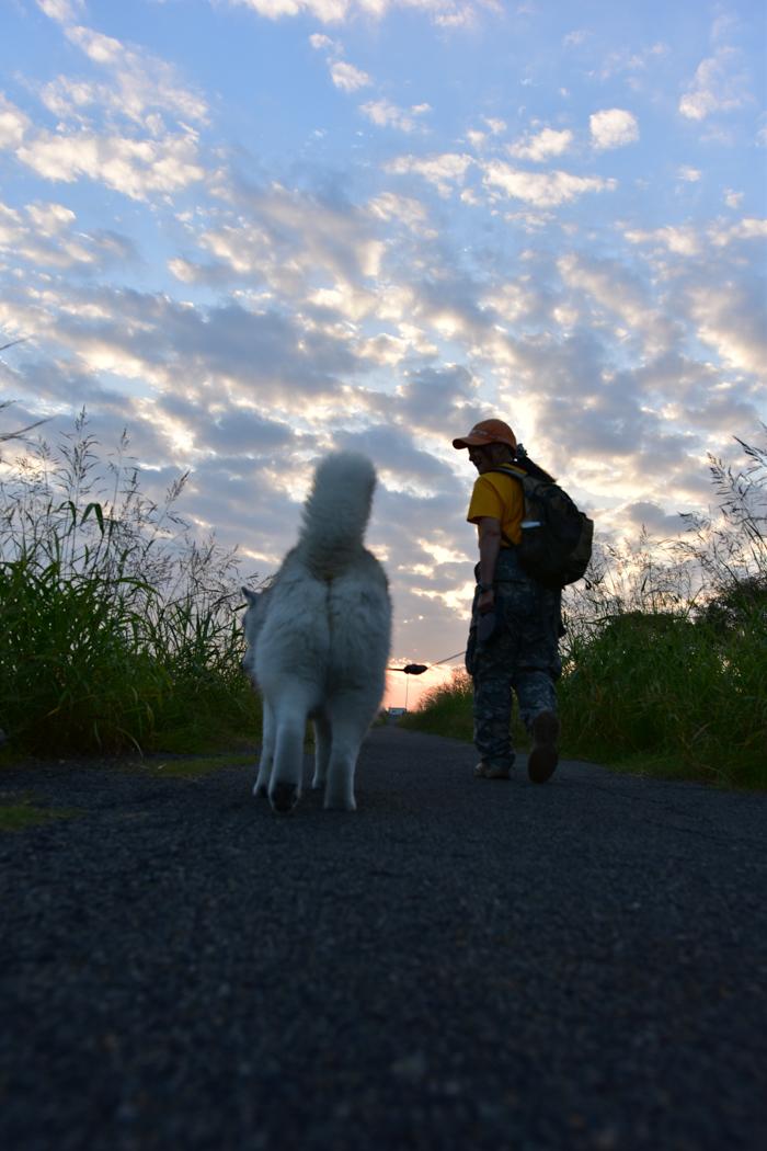充実! 朝のお散歩(*^_^*)_c0049299_21345100.jpg