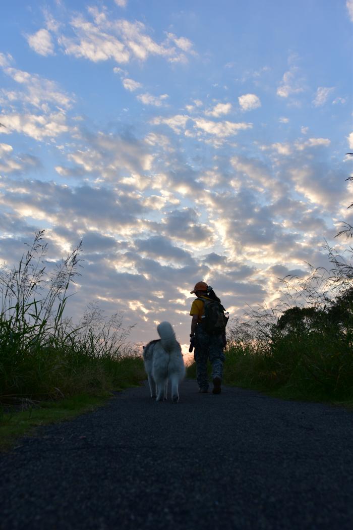 充実! 朝のお散歩(*^_^*)_c0049299_21352686.jpg