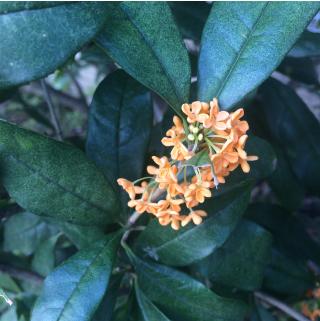 いまステキなオレンジ色_f0224207_13024559.jpg