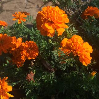 いまステキなオレンジ色_f0224207_13030939.jpg