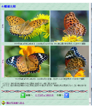 いまステキなオレンジ色_f0224207_13033732.jpg