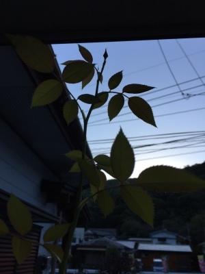 おはようの朝_f0148726_16563326.jpg