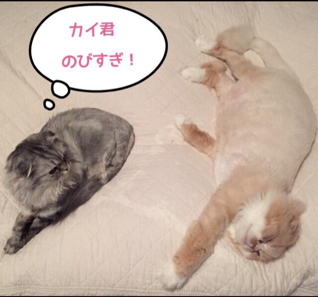 カイ、モモ おかえり_c0223630_08533186.jpg