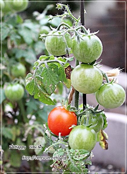五色の花おむすび弁当とおにぎりアクション2017とミニトマト成長日記⑥♪_f0348032_17520664.jpg