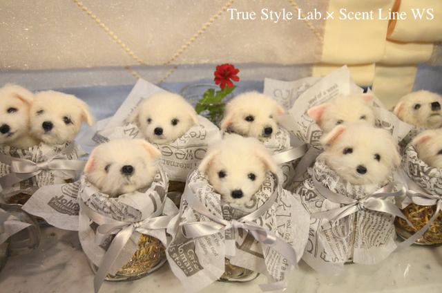 羊毛フェルトWS「マルチーズの子犬」レポート3_c0099133_00273516.jpg