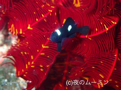 盛りだくさんな川奈の海_b0163039_17080057.jpg