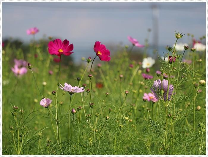 久しぶりの日帰りバスツアー、お花に関してはちょっと残念な結果だったけど、こればかりはね(´A`。)グスン_b0175688_00310942.jpg
