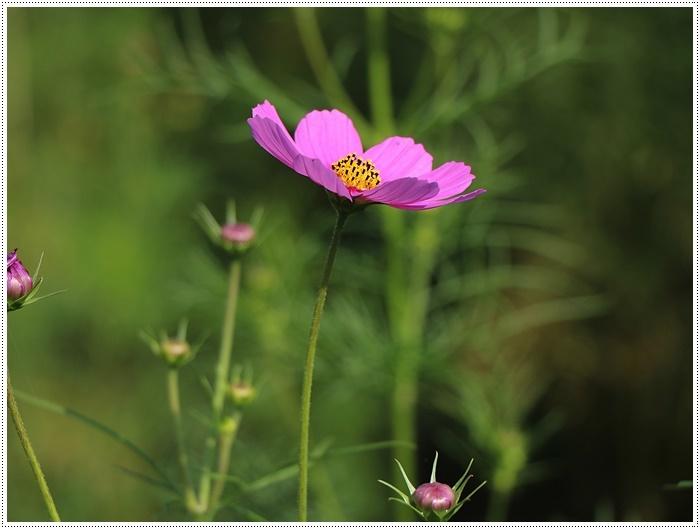 久しぶりの日帰りバスツアー、お花に関してはちょっと残念な結果だったけど、こればかりはね(´A`。)グスン_b0175688_00311438.jpg