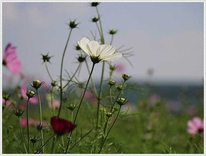 久しぶりの日帰りバスツアー、お花に関してはちょっと残念な結果だったけど、こればかりはね(´A`。)グスン_b0175688_00312072.jpg